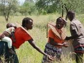 Pokots harvesting grass seed comp