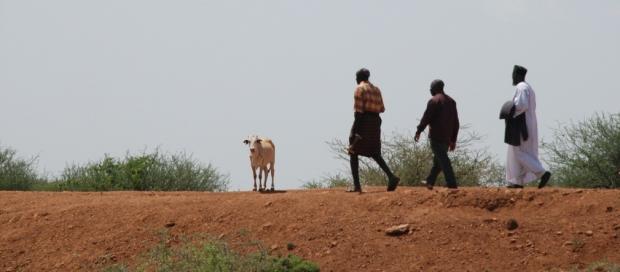 Joseph Kwopin leads Pastor James Wuye and Imam Muhammad Ashafa around his farm in East Pokot.
