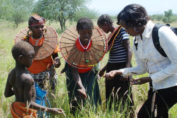 Pokot women show grass seed to Ilchamus community leader Maryann Lekisemon (right).