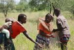 Pokot women harvesting grass seed